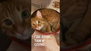 Кот Том в кастрюле / Котик спит в тазу / Котёнок в раковине / Кот любит поспать в необычных местах