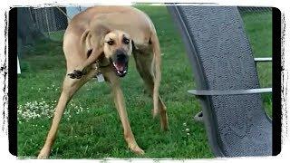 ПРИКОЛЫ С ЖИВОТНЫМИ | FUN WITH ANIMALS #387