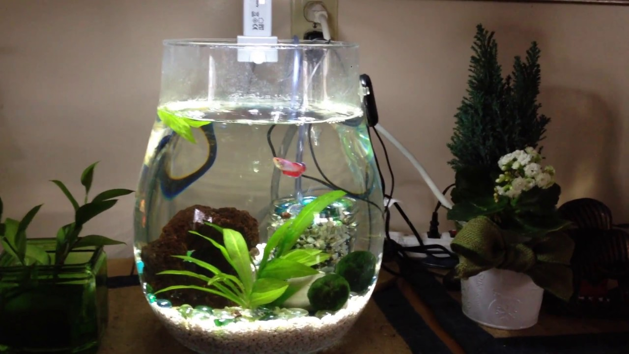 Self cleaning zen betta bowl 2 gallon youtube for Self cleaning betta fish tank