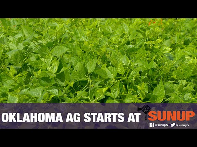 Tepary Beans - A New Forage for Oklahoma? (8/22/20)