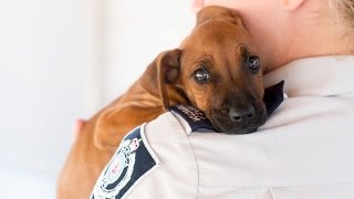 Rspca Short Tails: Puppy Rescue