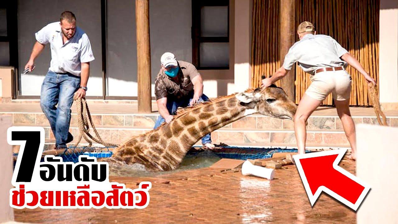 7 สัตว์ป่าที่ขอความช่วยเหลือ ให้หลุดพ้นจากความตาย!!