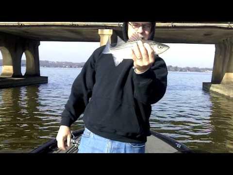 Striper Fishing on the Bush River - Final Day of the Season 2012