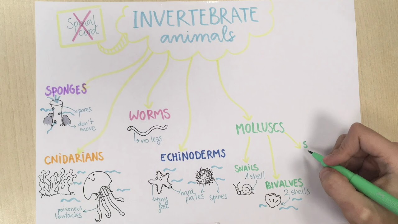 Invertebrate Animals Natural Science For Primary Education Youtube