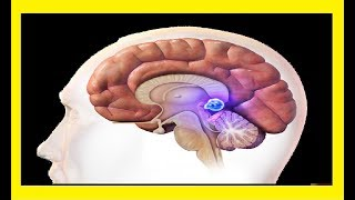 The pineal gland and the subconscious (Metaphysics of the Gods)