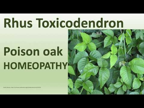 13 Homeopathy Medicine, Homeopathic Remedies - Rhus toxicodendron (poison oak)