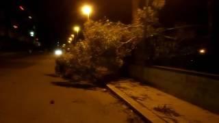 Caduta albero via Mantegna
