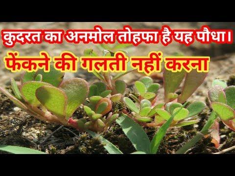 Wonderful Health Benefits of the Kulfa (Purslane ) || By Sonam's Lifestyle