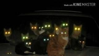 Как мир видят кошки и собаки