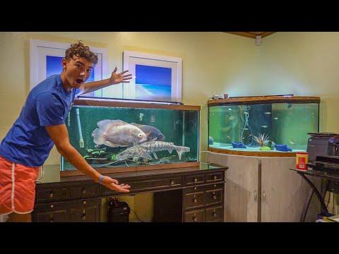 Trained AGGRESSIVE ALIEN Fish Have Their Own AQUARIUM!