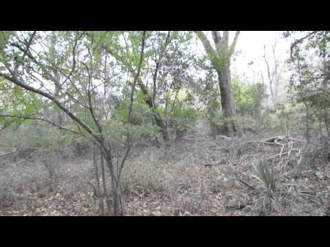 The Long walk Buck HD