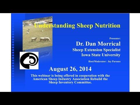 Sheep Nutrition (9)