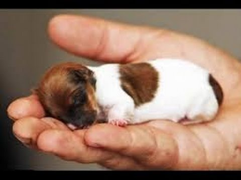 Top 10 Small Dogs Breeds You Found Amazing