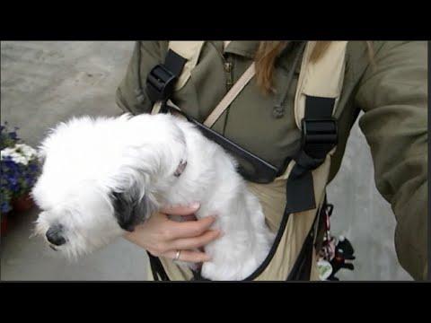 Maandag 24 mei vlog #2 - Hond in een tas!?