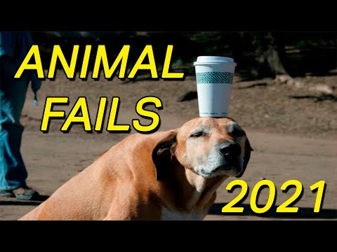 BEST ANIMAL FAIL COMPILATION 2021 – TRY NOT TO LAUGH