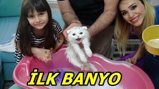 Lİna'nın Kedisi Pamuk Dorin'in İlk Banyosu ! Kedi Nasıl Yıkanır! Rukiye Çetinkaya