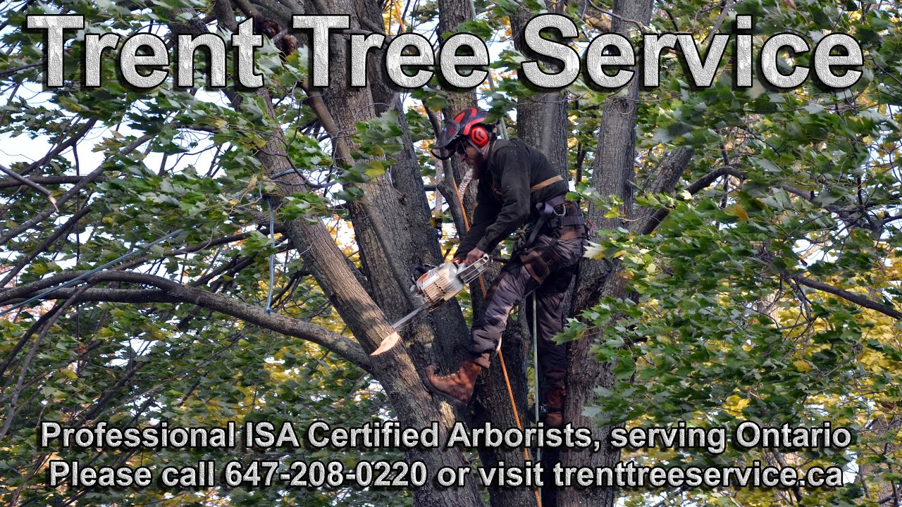 Ontario Certified Arborist