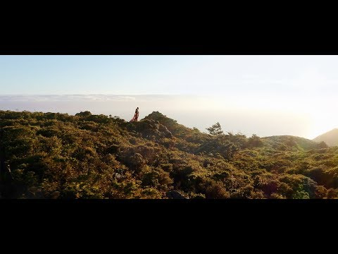 gorgeous-engagement-video-in-cypress-tree-tunnel-in-point-reyes-&-ocean-cliffs-off-the-pacific-ocean