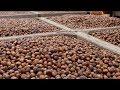 International Trade Dispute May Open Doors for the Pacific Northwest Hazelnut Industry