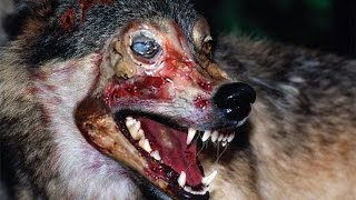 5 animales Zombies REALES del Mundo/Sufrimiento extremo