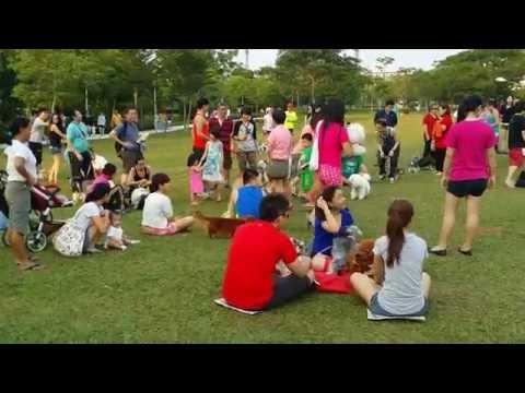 Bichon Frise hd video | FunnyDog.TV
