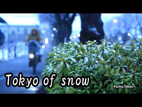 雪の東京(2014年2月4日)Tokyo of snow.