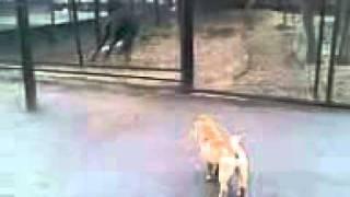 Конь и собака под гитару