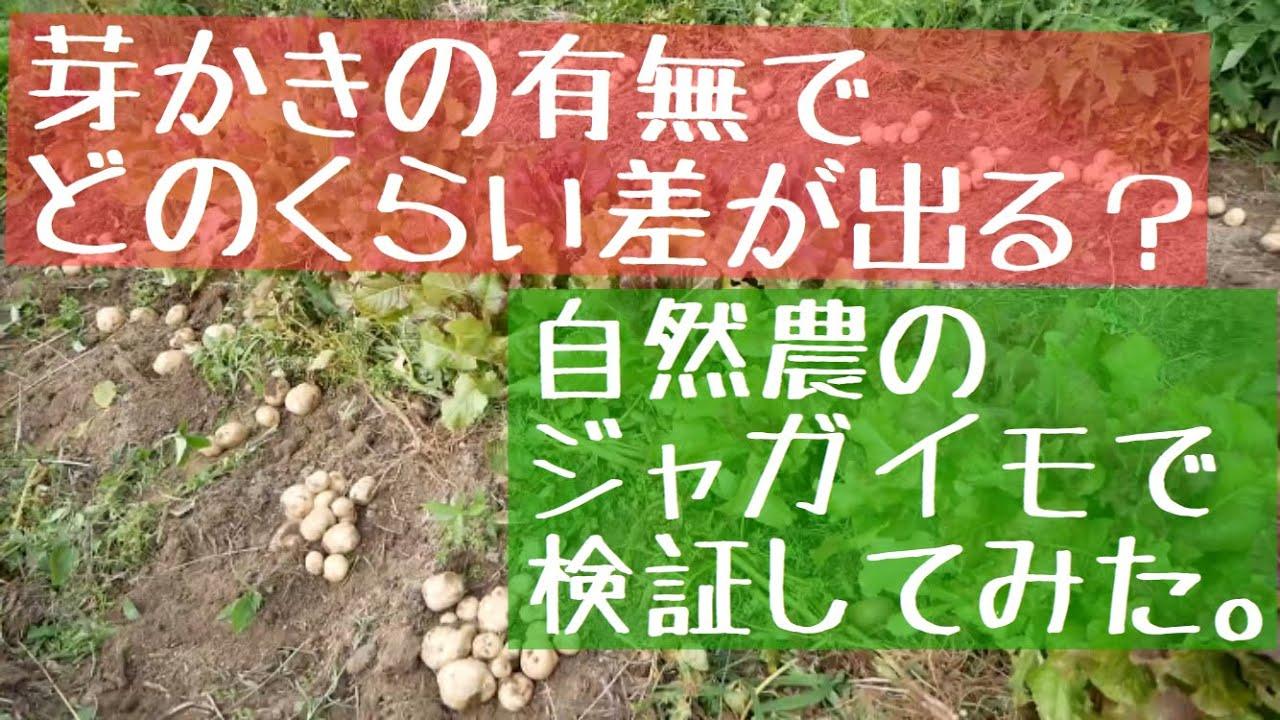 肥料 じゃがいも タキイのジャガイモ栽培マニュアル  