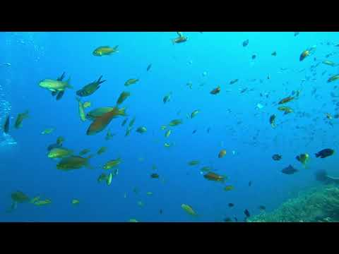 scuba dive in bohol