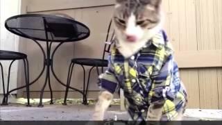 Видео про смешное до слез Смешные видео про кошек до слез Видео про котов смешное до слез