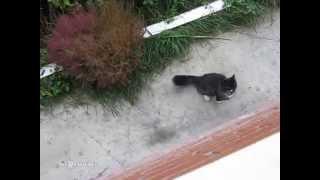 The Return of the Cat / Возвращение кота