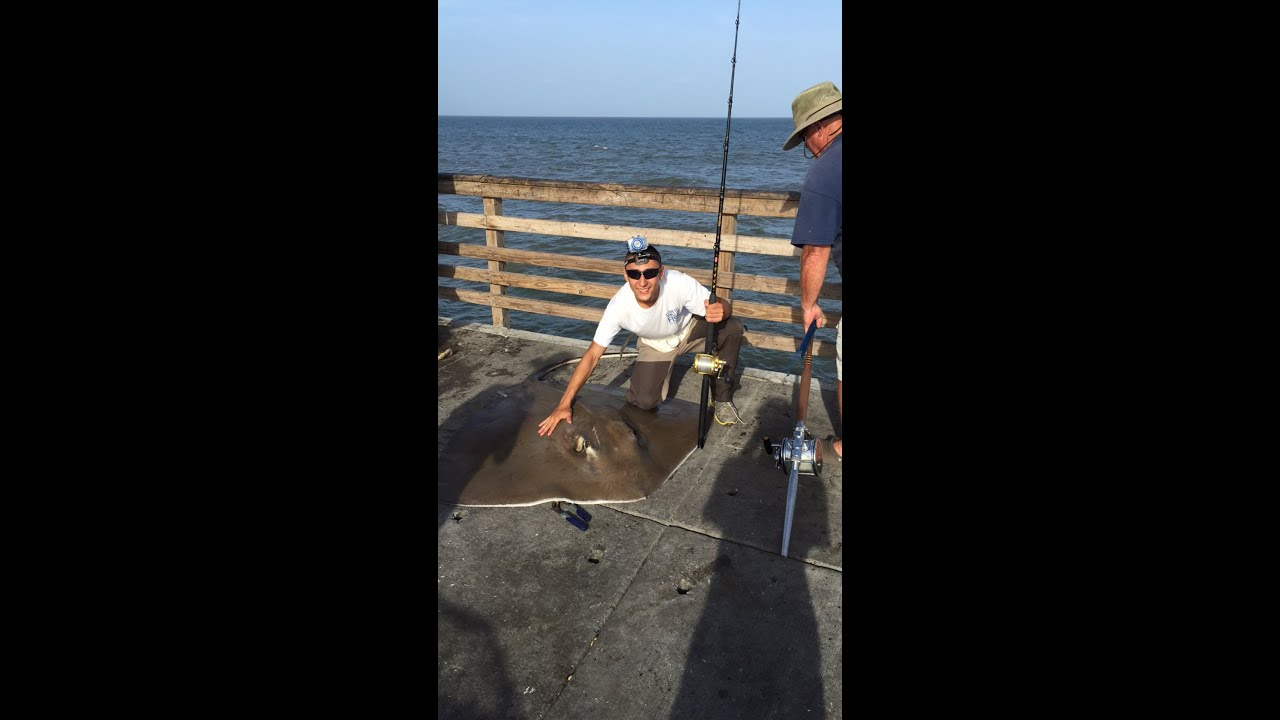 bob hall pier fishing 6 28 15 5 39 300lb stingray youtube