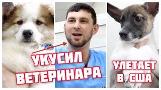 Осторожно! Много милых щенков в видео.