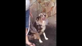 Sadie Barking Cured Utube