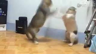 funny videos cats