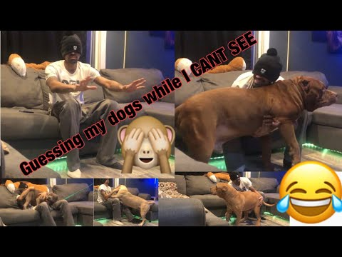 GUESSING MY DOGS NAMES WHILE BLINDFOLDED! HILARIOUS!!