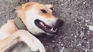 Санни ищет дом! Прекрасная собака в добрые руки