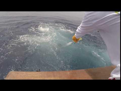 2017 Offshore World Championship   Ocean Reef Club Sailfish Championship Series   Pacific Sailfish