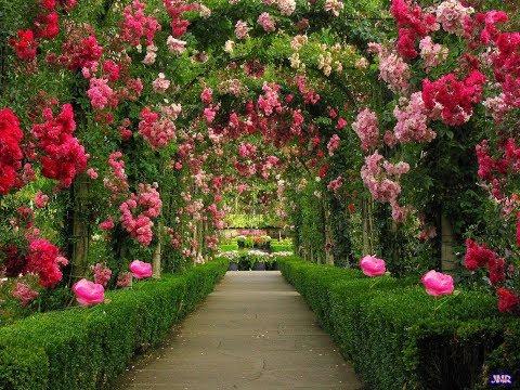 Lynn Anderson - Rose Garden (Lyric Video) [HQ]