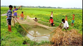 Net in a small village pond || Net Fishing at the small village pond with beautiful natural