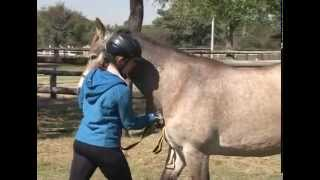 08 Backing up a horse