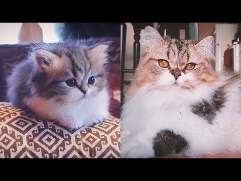 FROM KITTEN TO CAT IN 35 SECONDS