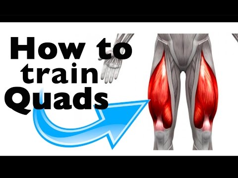 How to: Train the Quadricep Femoris (+9 gym exercises & scientific studies)