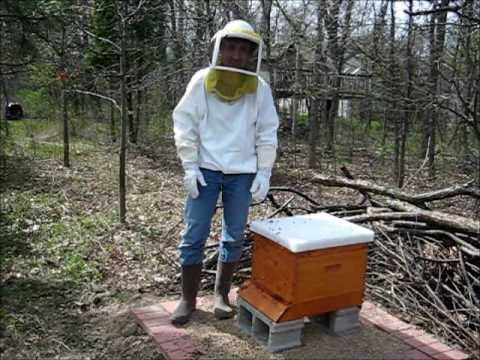 Backyard Beekeeping Part 1(S1:E1): Hiving The Bees   YouTube