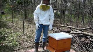 Backyard Beekeeping Part 1: Hiving the Bees