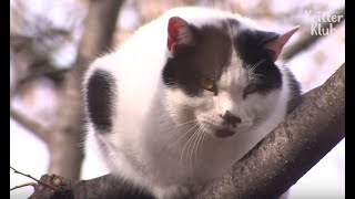 Adrenaline Junkie Cat Fakes A Rescue Situation | Kritter Klub