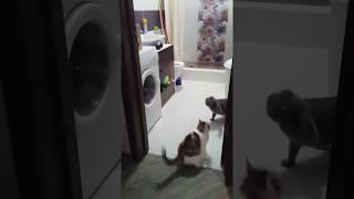 Смешные коты и кошки, эмоции!