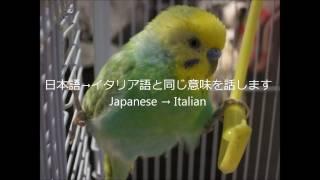 イタリア語、発音など間違ってたらすみません Sorry if our Italian is ...