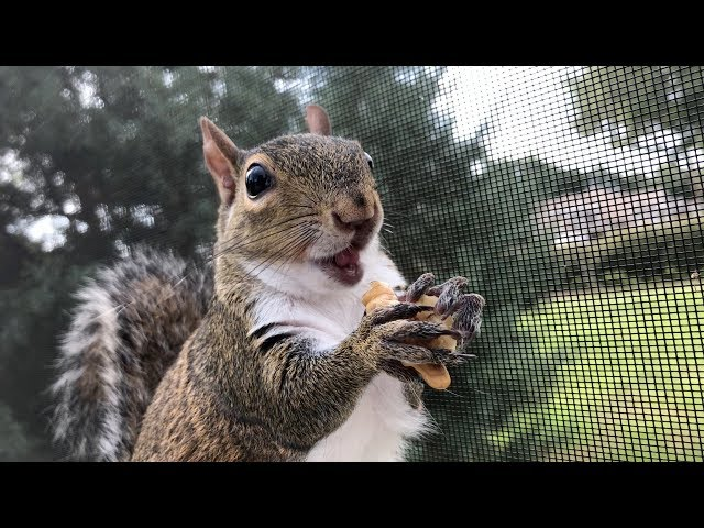 Serena Shows How Cute Squirrels Are While Eating! Cuteness Overload ???