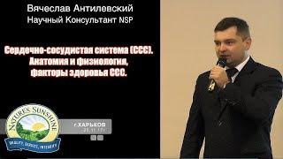 Атеросклероз сосудов мифы и реальность   врач Вячеслав Антилевский